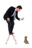 Homem de negócios sobre uma escada que aponta no cão Fotografia de Stock