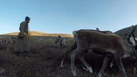 Homem de Tsaatan com sua rena no norther Mongólia video estoque