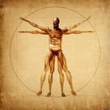 Homem de Vitruvian de Leonardo ilustração do vetor