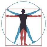 Homem de Vitruvian Proporções perfeitas da anatomia do corpo humano de Leonardo da Vinci no círculo e no quadrado Silhueta do vet ilustração stock