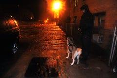 Homem desconhecido com o cão que presta atenção à rua inundada Fotografia de Stock Royalty Free