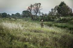 Homem do caçador na camuflagem que está no pantanal próximo da grama alta durante a caça Fotografia de Stock