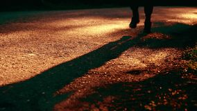 Homem do esporte que corre na estrada asfaltada Parque rural da cidade Raios verdes da floresta e do sol da árvore no horizonte filme