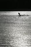 Homem do esqui aquático da silhueta no lago preto e branco Fotografia de Stock Royalty Free