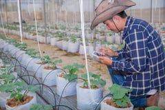 Homem do fazendeiro da tecnologia da agricultura que usa dados da análise de tablet pc O agrônomo que examina o crescimento das p fotografia de stock