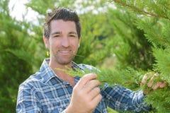 Homem do retrato que guarda a flor da árvore do ramo na boca Imagens de Stock