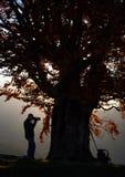 Homem do turista do caminhante com a câmera no vale gramíneo no fundo da paisagem da montanha sob a árvore grande fotografia de stock