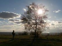 Homem e árvore com sol da noite Imagens de Stock Royalty Free