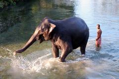 Homem e animal Mestre e empregado Elefante com homem fotos de stock