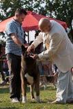 Homem e cão Foto de Stock Royalty Free
