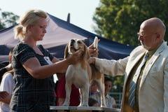 Homem e cão Imagem de Stock