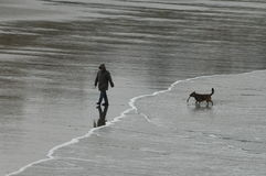 Homem e cão com a vara na praia Fotos de Stock