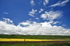 Homem e campo bonito Imagens de Stock