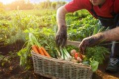 Homem e cesta com vegetais Imagem de Stock Royalty Free