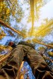 Homem e a floresta no outono Imagens de Stock