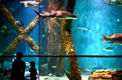 Homem e menina que olham o aquário Fotos de Stock