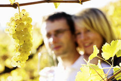 Homem e mulher felizes no vinhedo. Fotografia de Stock Royalty Free
