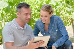 Homem e mulher nas vinhas que olham a tabuleta Foto de Stock