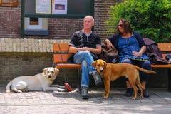 Homem e mulher que descansam no banco com seus cães em Zandvoort Fotos de Stock Royalty Free