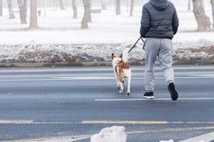 Homem e sua rua do cruzamento do cão Imagens de Stock Royalty Free