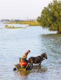 Homem em um carro do cavalo com um recipiente grande em Danube River Fotos de Stock Royalty Free