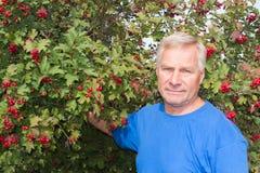 Homem em um fundo do viburnum vermelho do arbusto Imagem de Stock