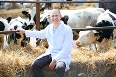 Homem em um revestimento branco na exploração agrícola da vaca Foto de Stock