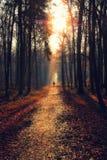 Homem em um trajeto em uma floresta temperamental Imagem de Stock