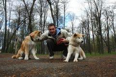 Homem feliz com dois cães Imagens de Stock