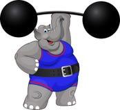 Homem forte do elefante Foto de Stock Royalty Free