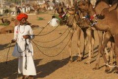 Homem indiano com camelos imagens de stock