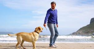 Homem maduro feliz que joga com o cão na praia vídeos de arquivo