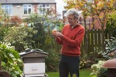Homem maduro que olha abelhas de Honey Produced By His Own foto de stock royalty free
