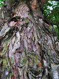 Homem na árvore Foto de Stock