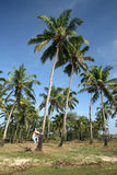 Homem na árvore de coco Imagem de Stock