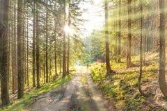 Homem na estrada na floresta verde Imagem de Stock Royalty Free