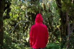 Homem na floresta, Nova Zelândia fotografia de stock