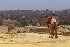 Homem no camelo contra a arquitetura da cidade do Cairo Imagem de Stock Royalty Free