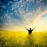 Homem no campo amarelo Fotografia de Stock Royalty Free