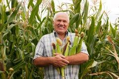 Homem no campo com orelhas de milho Fotografia de Stock
