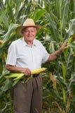 Homem no milho de campo com orelhas de milho Imagem de Stock