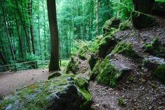 Homem no musgo em uma floresta alemão bewitched Fotografia de Stock Royalty Free
