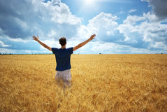 Homem no prado amarelo do trigo imagem de stock