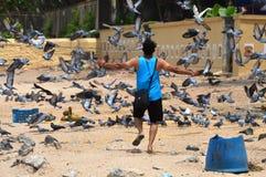 Homem novo com pombos do voo imagem de stock
