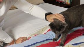 Homem novo considerável que afaga seu Gray Cat Pet filme