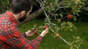Homem novo considerável que olha maçãs filme