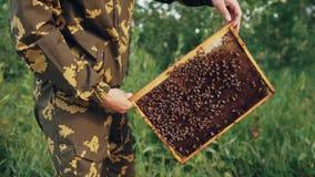 Homem novo do apicultor que guarda o quadro de madeira com as abelhas para verificar ao trabalhar no apiário video estoque