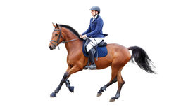 Homem novo do cavaleiro no cavalo de baía isolado no branco Fotografia de Stock Royalty Free