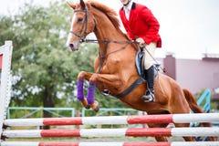 Homem novo do cavaleiro que salta no cavalo sobre o obstáculo imagem de stock