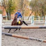 Homem novo do cavaleiro que toma seu curso no obstáculo seguinte Fotografia de Stock